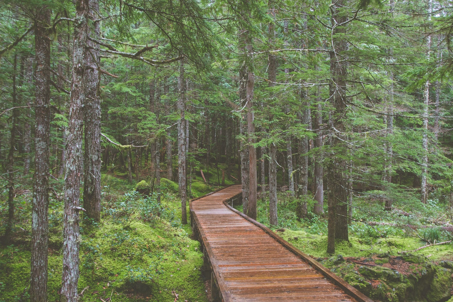 a wooden footpath in the woods